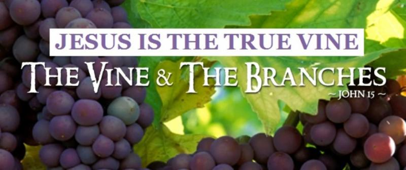 Jesus Is The True Vine